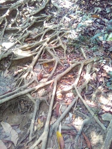 Crawling roots